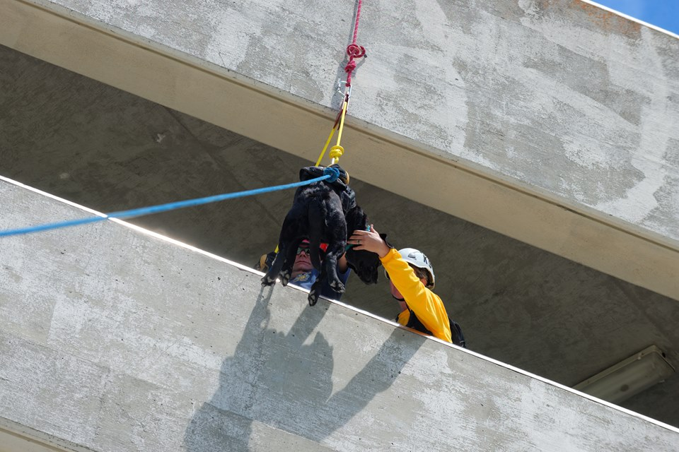 K-9 training in rapelling