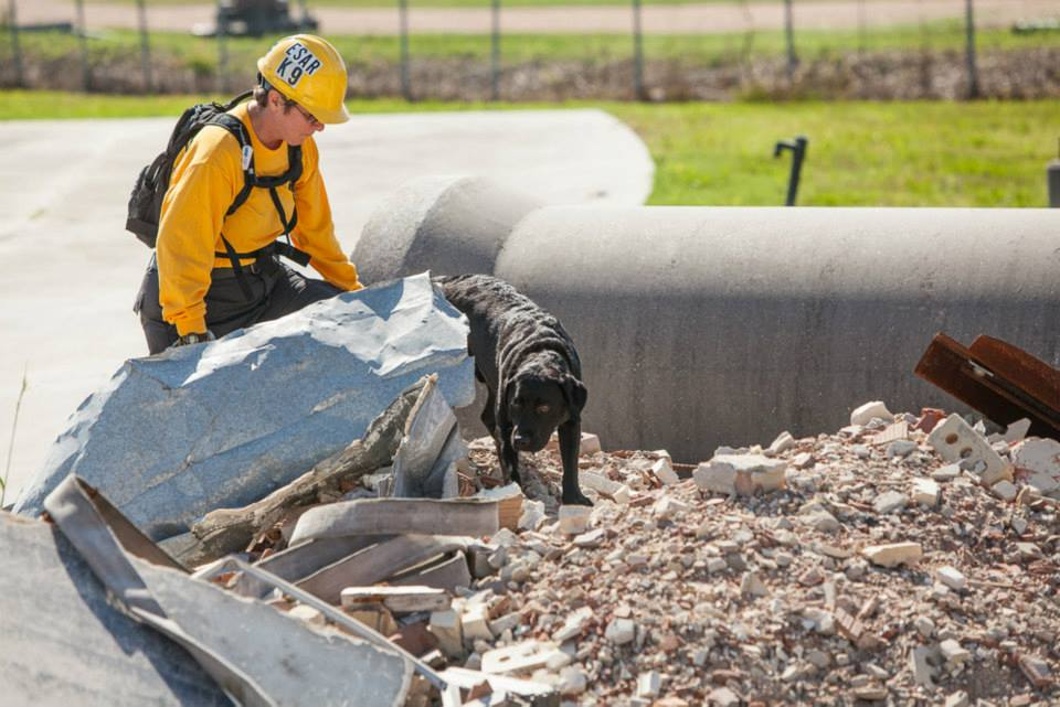 K-9 searching a rubble pile